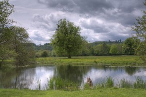 Runnymede Meadow where King John reluctantly accepted Magna Carta in 1215
